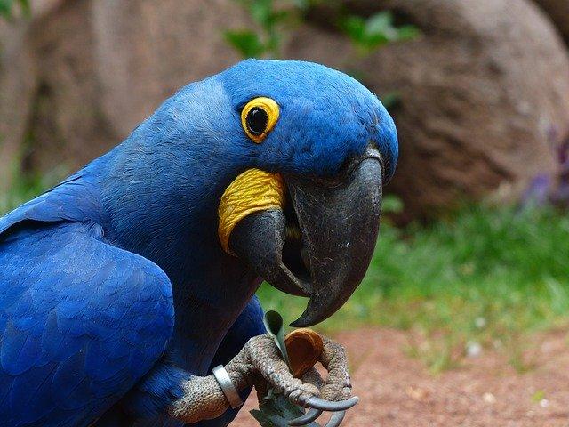 woliera dla papug w domu