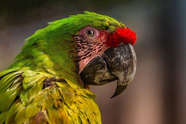 przysmaki dla papug
